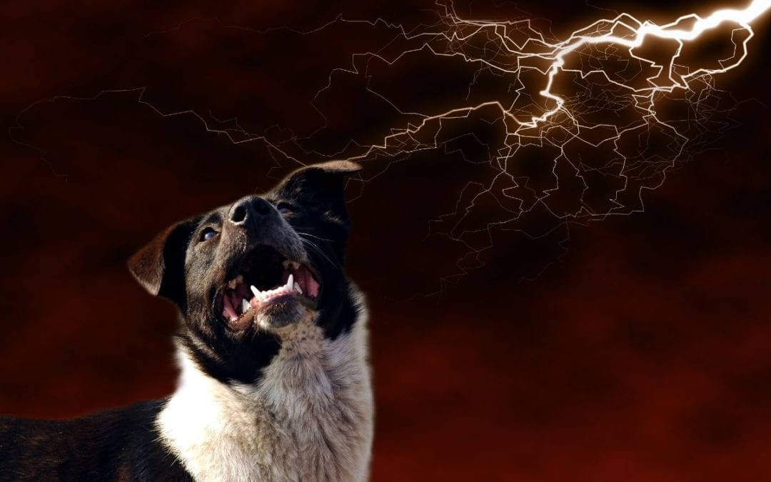Thunderstorm Phobia in Dogs